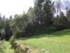 forest-garden-001