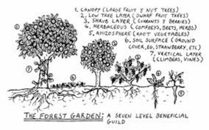 Picture of the 7 Forest Garden Layers by Graham Burnett