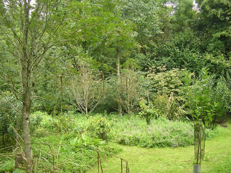 What is forest gardening earth ways for Jardin urbain permaculture