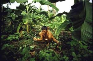 Indigenous forest garden