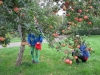 apples-picking-on-the-ground_15873279680_o
