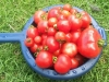 enjoying-home-grown-food_15174615801_o