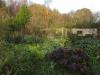 permaculture-garden_15872784300_o