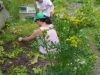 permaculture-weeding_14991152808_o