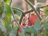 tomatoes_16059636772_o