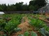 Brassica heaven