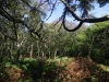 Ancient birch wood