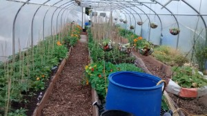 Polytunnel Permaculture design in PM magazine