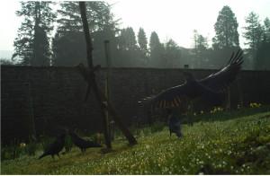 Feeding birds in the forest garden helps to bring in phospates.