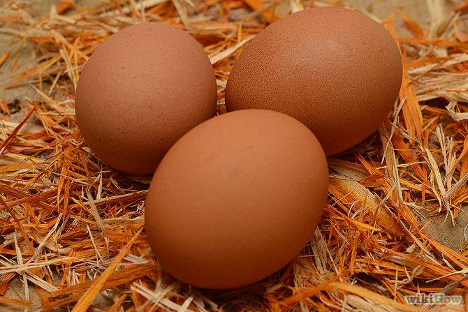 6_permaculture_chicken_eggs